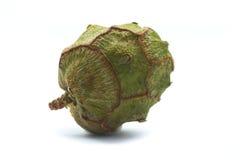 Cono di Cypress isolato Fotografia Stock