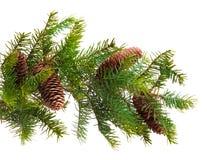 Cono ed albero di Natale isolato su bianco fotografie stock