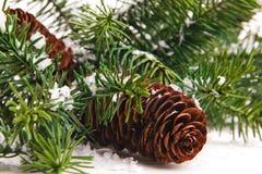 Cono ed albero di Natale isolato su bianco immagine stock libera da diritti