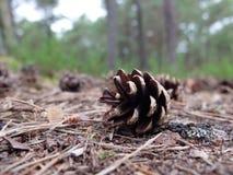 Cono en el medio de un bosque Foto de archivo