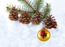 Cono giallo del pino e della sfera Fotografia Stock Libera da Diritti