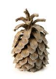 Cono grande del pino Foto de archivo libre de regalías