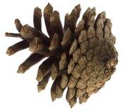 Cono grande del pino Imagen de archivo
