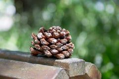Cono grande del pino en el tablero de madera Fotografía de archivo