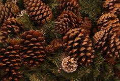 Cono marrón de una sola pieza del fondo festivo del invierno en la rama de la picea del fondo, la Navidad y el Año Nuevo Imagen de archivo