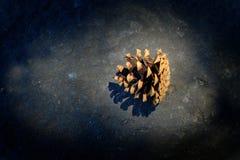 Cono Pinecone del pino en las semillas de la luz del sol para el crecimiento y el bosque conífero fotos de archivo libres de regalías