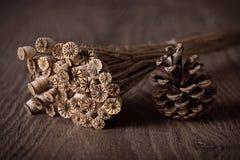 Cono seco de la cabeza y del pino de la amapola de Boquet en un fondo de madera Fotografía de archivo