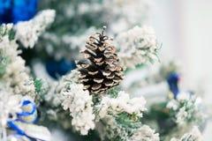 Cono sull'albero di abete con neve esterno Immagini Stock