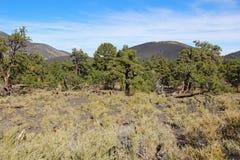 Cono vulcanico della cenere del cratere di tramonto vicino all'albero per bandiera, Arizona Fotografia Stock Libera da Diritti