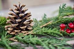 Cono y bayas del pino Foto de archivo libre de regalías