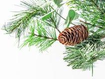 Cono y ramificación del pino Foto de archivo libre de regalías