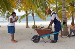 Cononut fruit vendor Royalty Free Stock Images