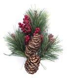 Conos de abeto de la Navidad Imagen de archivo