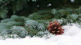 Conos de abeto en la rama del abeto cubierta con nieve metrajes