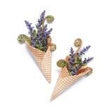 Conos de la galleta con las flores azules del salvia Fotografía de archivo libre de regalías