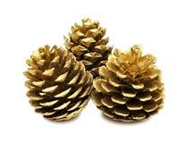 Conos de oro del pino Foto de archivo libre de regalías