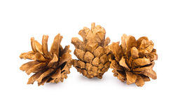 Conos de oro del pino Foto de archivo