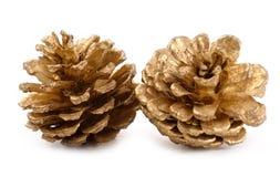 Conos de oro del pino Fotografía de archivo libre de regalías