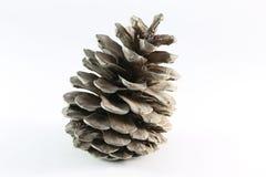 Conos de árboles coníferos Imagen de archivo