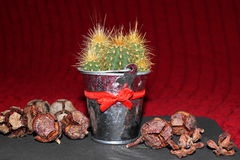 Conos del cactus y del enebro Imagen de archivo