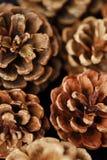 Conos del marrón del pino y fondo hermosos del invierno Fotografía de archivo