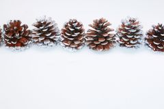 Conos del Pin imagen de archivo libre de regalías
