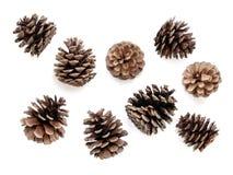 Conos del pino Imagenes de archivo