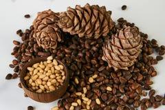 Conos del pino con las nueces de pino maduras del cedro Fotografía de archivo