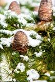 Conos del pino cubiertos en nieve Imágenes de archivo libres de regalías