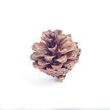 Conos del pino de Brown en un fondo blanco imagen de archivo libre de regalías