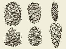Conos del pino del árbol de navidad del abeto del cedro ilustración del vector