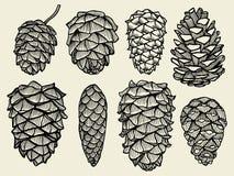 Conos del pino del abeto del cedro ilustración del vector