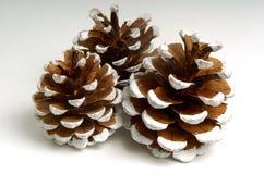 Conos del pino del día de fiesta Imagen de archivo libre de regalías
