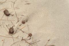 Conos del pino en fondo de la playa de la arena Imagen de archivo