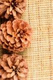Conos del pino en la estera de la arpillera Imagen de archivo