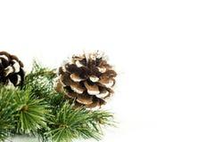 Conos del pino en la rama de árbol de navidad fotos de archivo libres de regalías