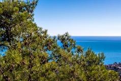 Conos del pino en la rama y el mar Mediterráneo Imagen de archivo