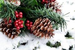 Conos del pino en nieve Imágenes de archivo libres de regalías