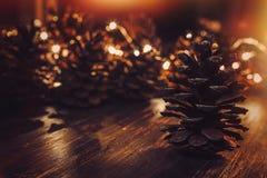 Conos del pino en un fondo oscuro iluminado imagenes de archivo