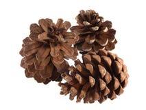 Conos del pino o de abeto en un fondo blanco Imagen de archivo libre de regalías