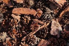 Conos del pino y fondo de la corteza Fotos de archivo libres de regalías