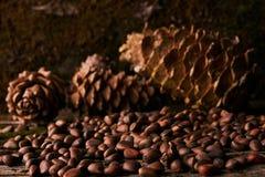 Conos del pino y nueces de pino secas del cedro Fotografía de archivo libre de regalías