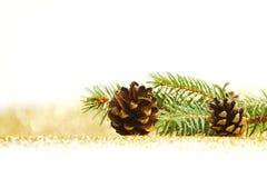 Conos del pino y rama del abeto Imagen de archivo