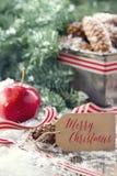 Conos del pino y ramas de árbol spruce verdes Fotos de archivo libres de regalías