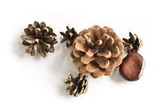 Conos del pino y una castaña Foto de archivo