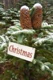 Conos en el tiempo de la Navidad Fotos de archivo