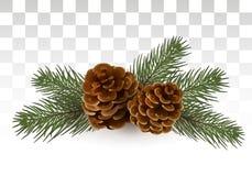 Conos en ramas spruce Composición de la Navidad Un pequeño festivo