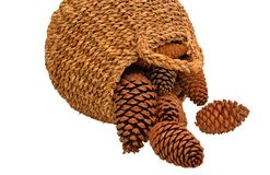 Conos enormes del pino que caen de cesta de mimbre Imagen de archivo libre de regalías