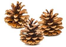 Conos hermosos del pino aislados en un fondo blanco Foto de archivo libre de regalías
