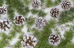 Conos imperecederos del pino de la Navidad del árbol con la rama en un fondo blanco Adorne la endecha plana del elemento imagenes de archivo
